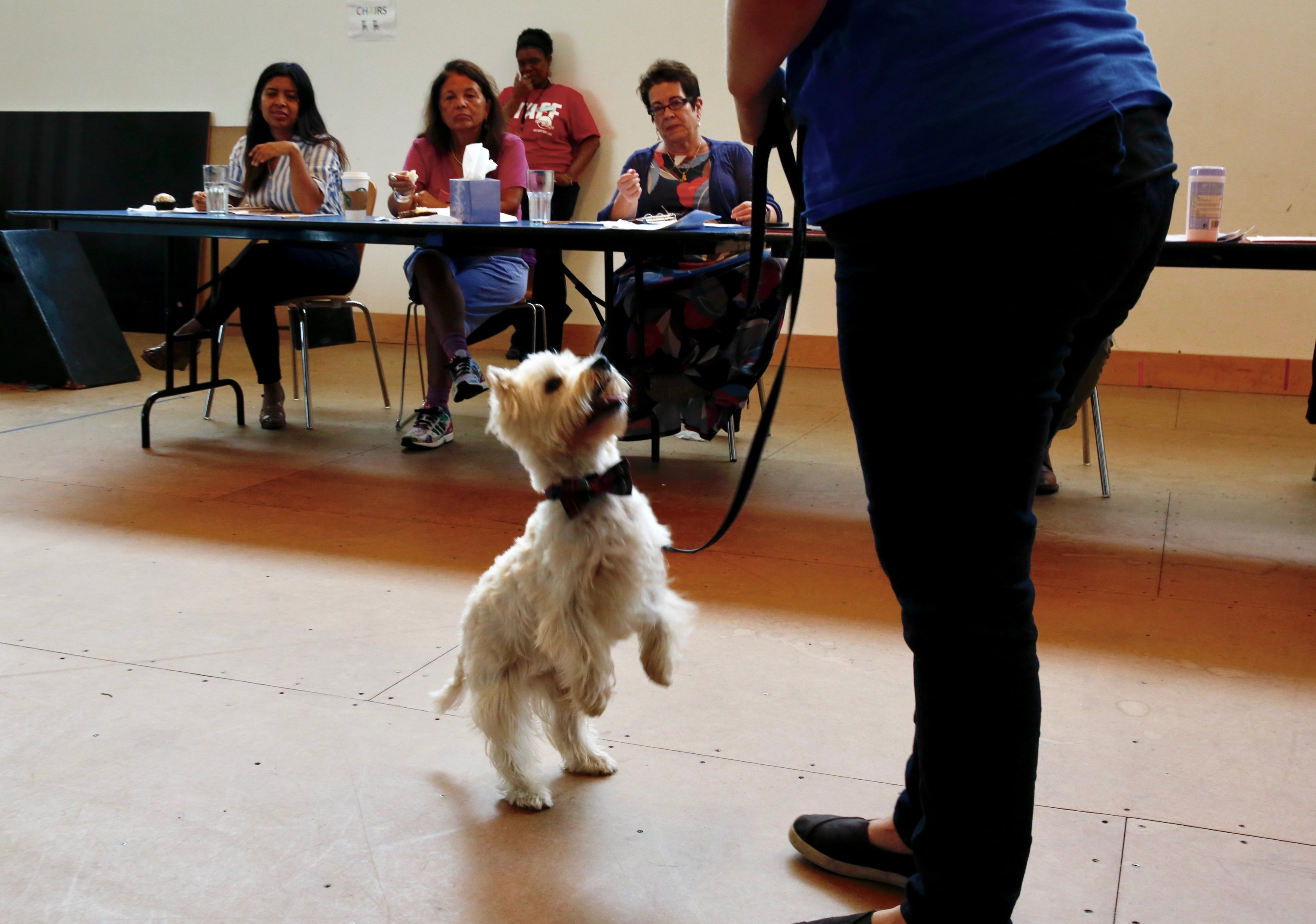 Charlie the Westie sported a bow tie during his audition. Here, he follows Valm's directions.