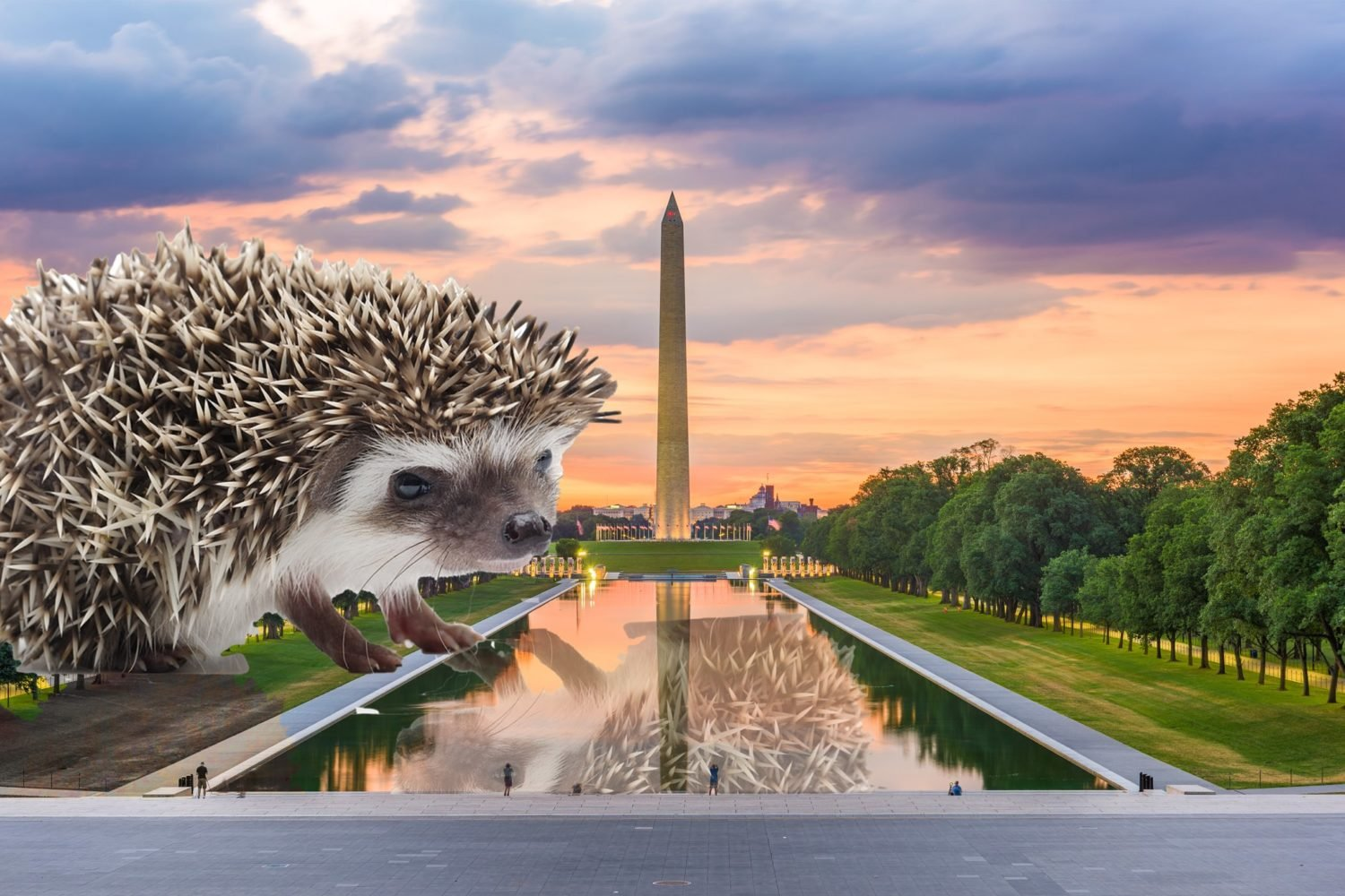 hedgehogs dc