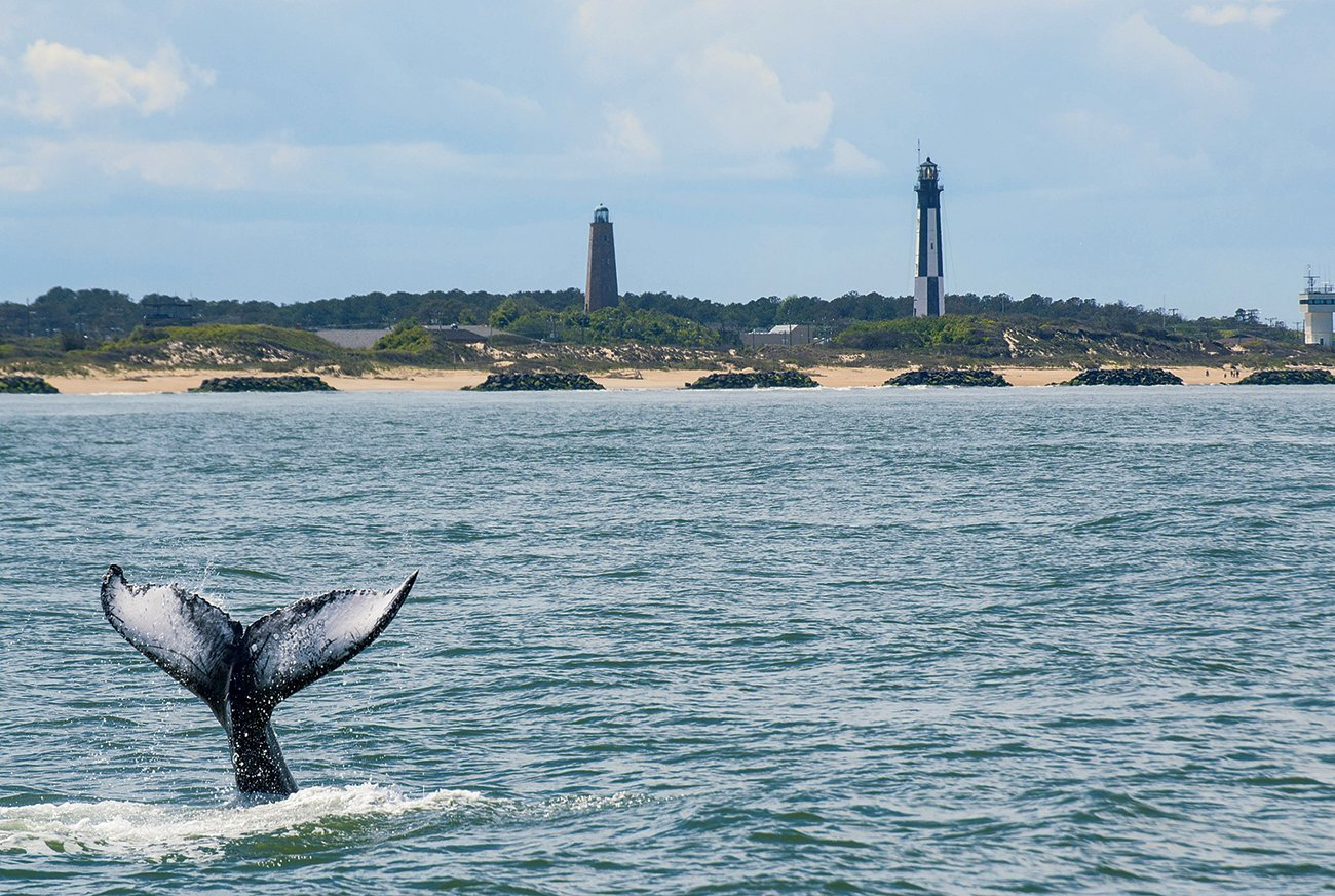 Weekend getaway: whale-spotting in winter.