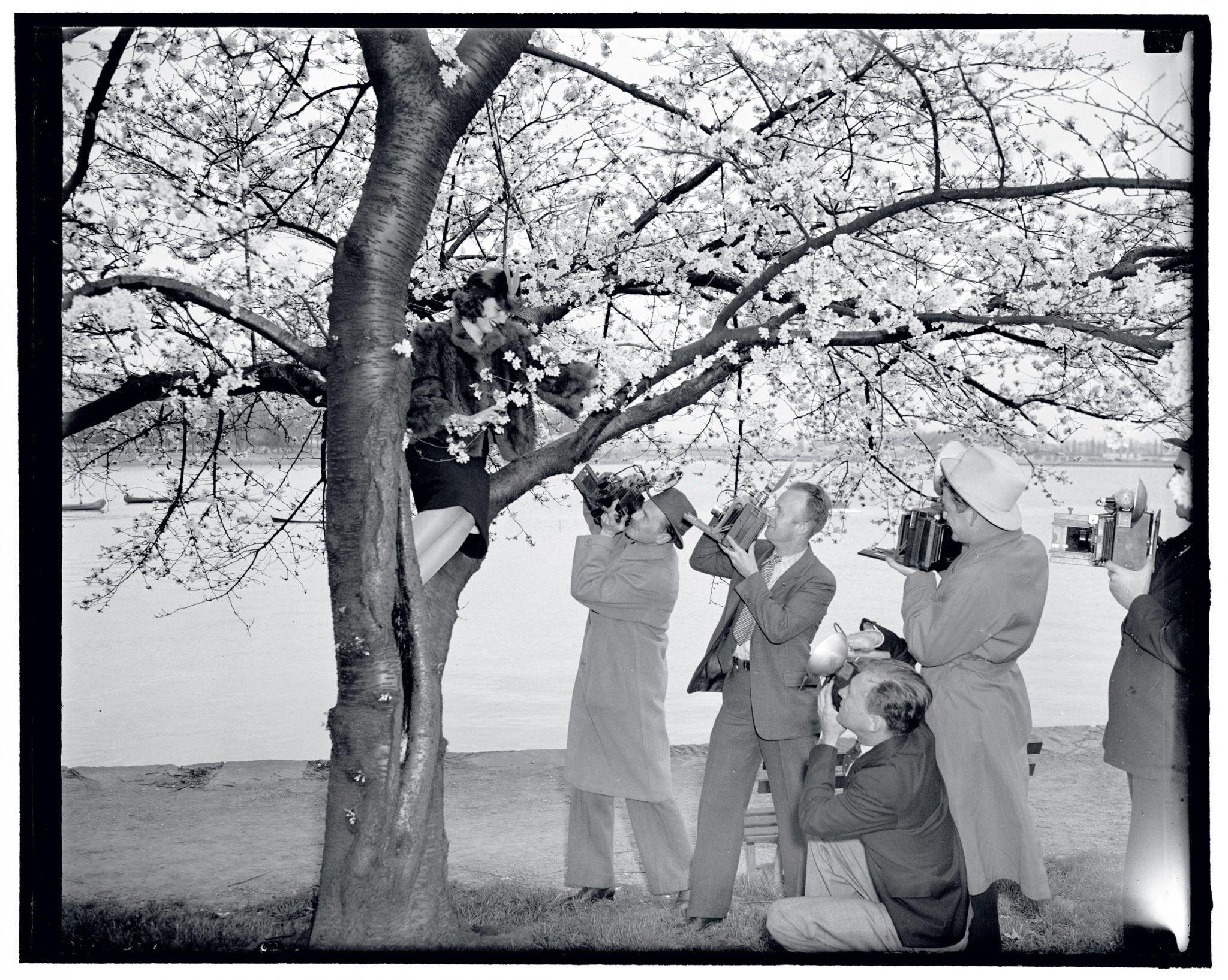Check Out These Amazing Vintage Cherry Blossom Photos