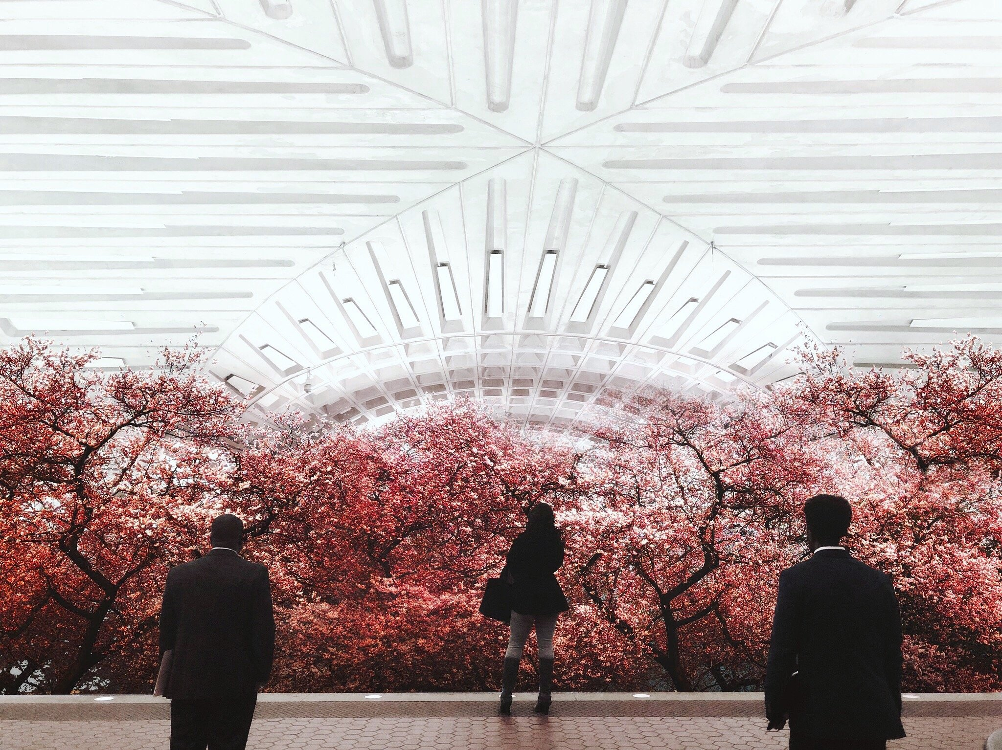 This Local Artist Transforms DC Metro Stations Into Beautiful Nature Scenes