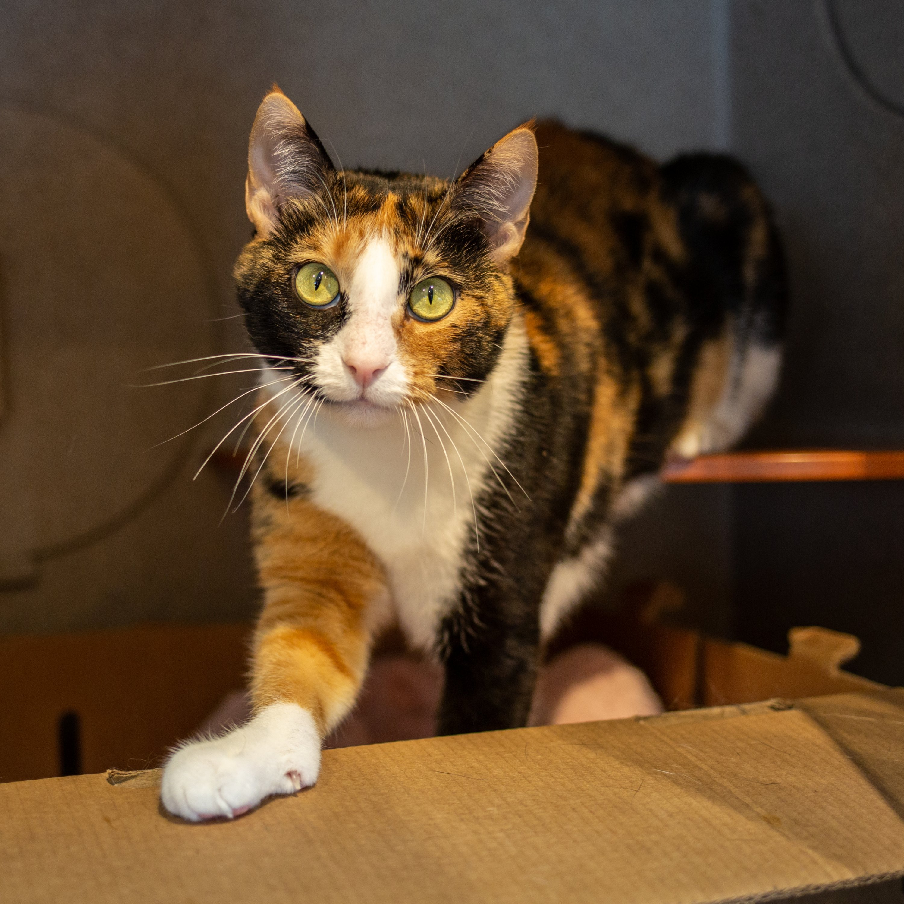 You Can Adopt a Cat for Free at DC\u0027s Humane Rescue Alliance