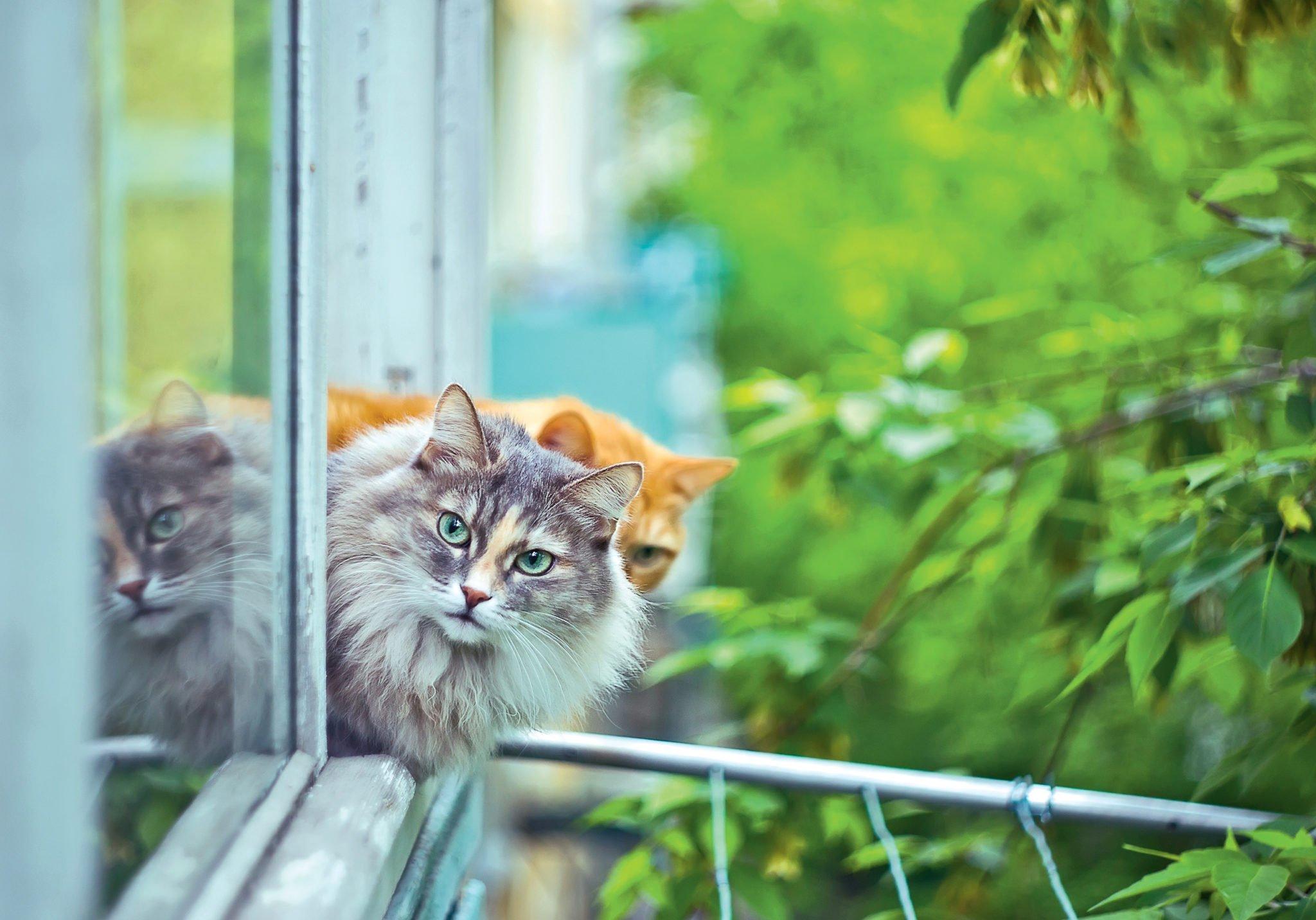 Резултат слика за many cats and house
