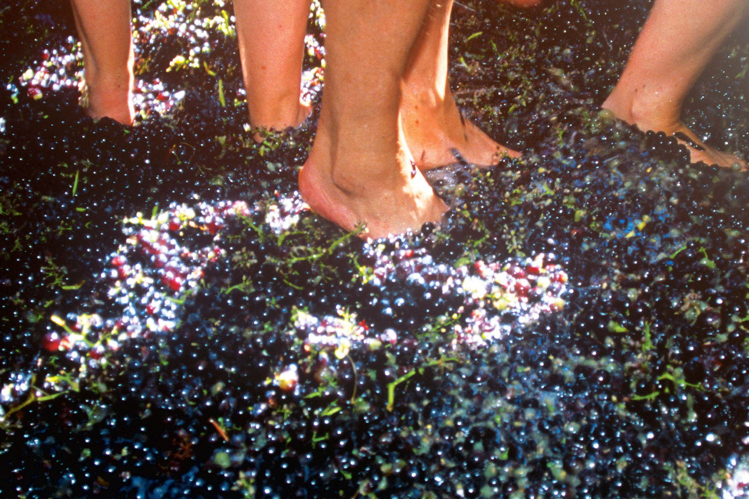 Stomping grounds: Fall wine fests. Photograph Courtesy of Prisma by Dukas Presseagentur/Alamy.