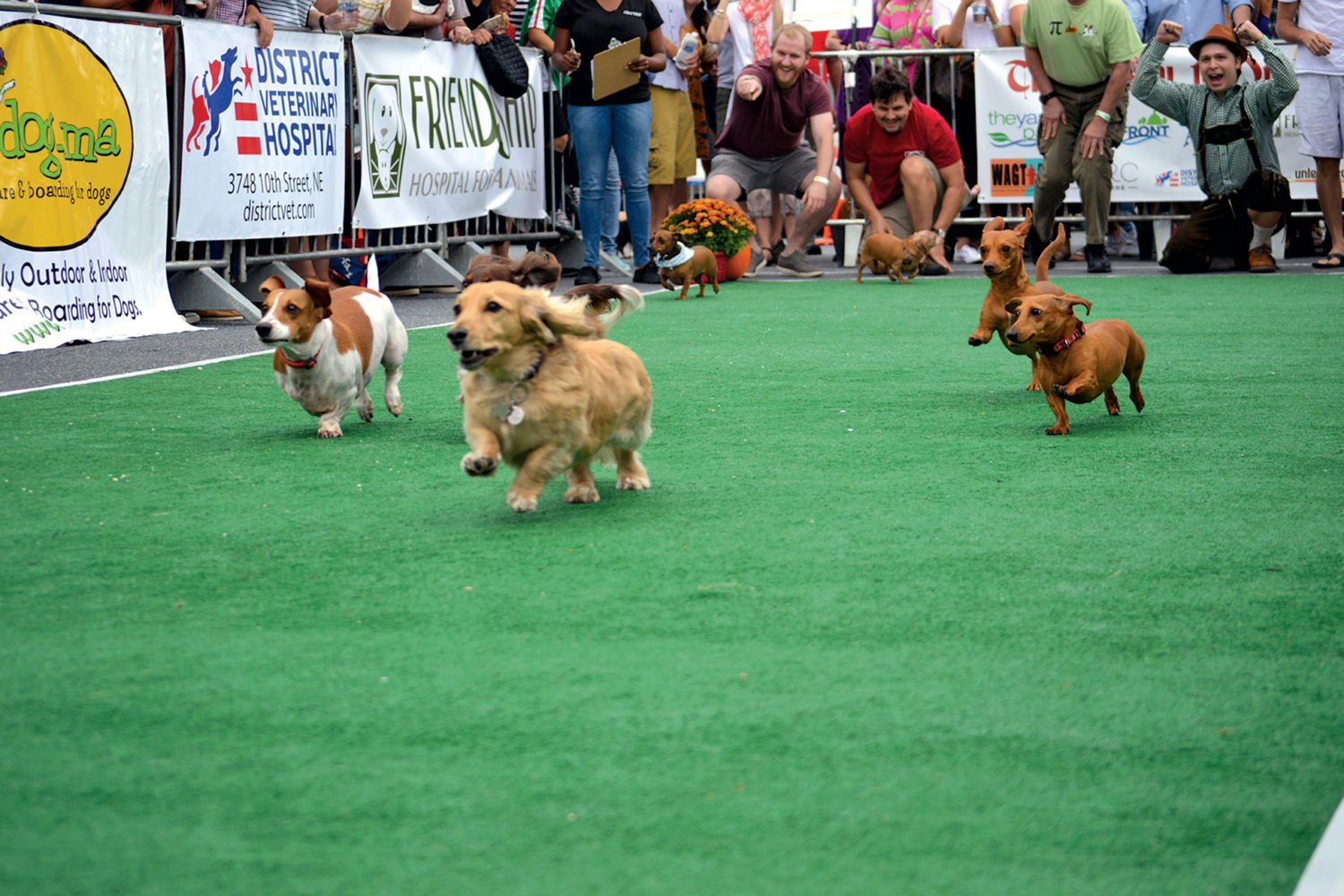 This year's Wiener 500 is September 21. Photograph by Adrianne Depew.