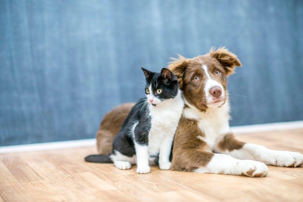 Love Your Pets? Take our Pet Care Survey! | Washingtonian (DC)