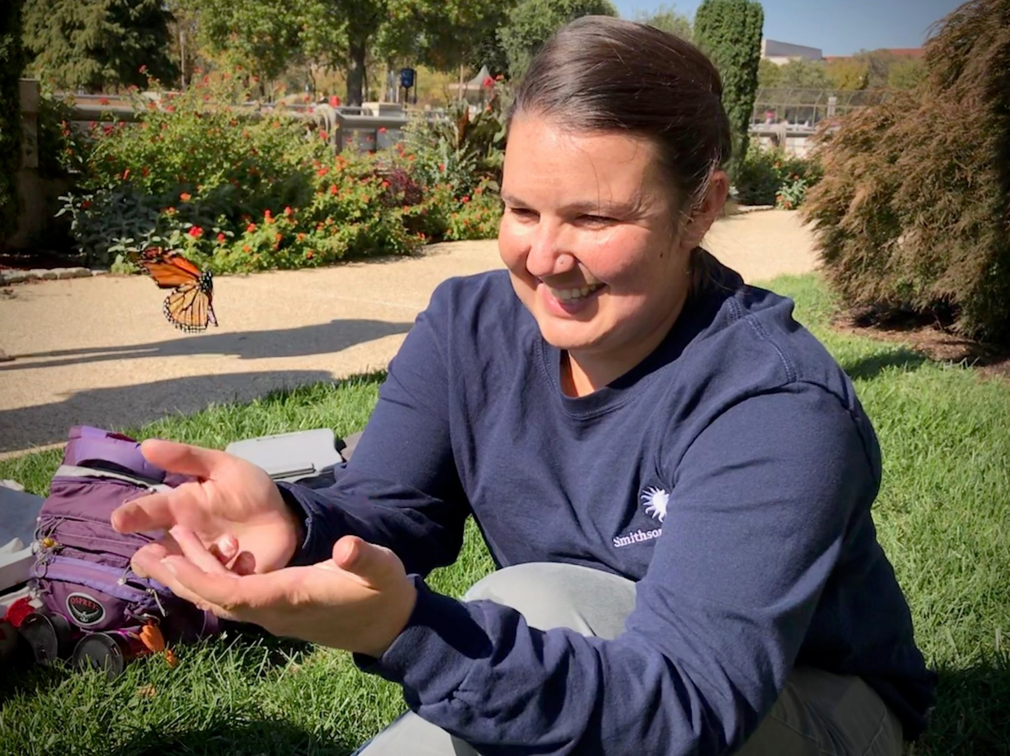 We Captured Monarch Butterflies on the Mall, Tagged Them, and Now They're Probably on Their Way to Mexico