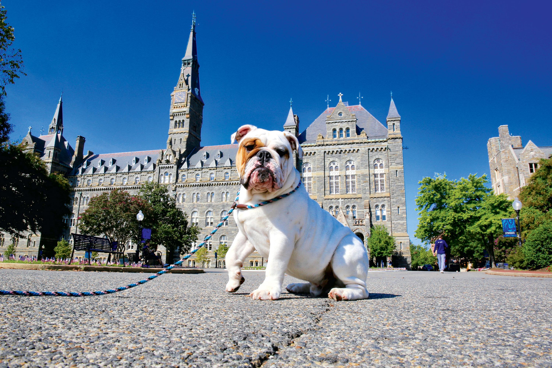 Meet Georgetown University's New Bulldog Puppy