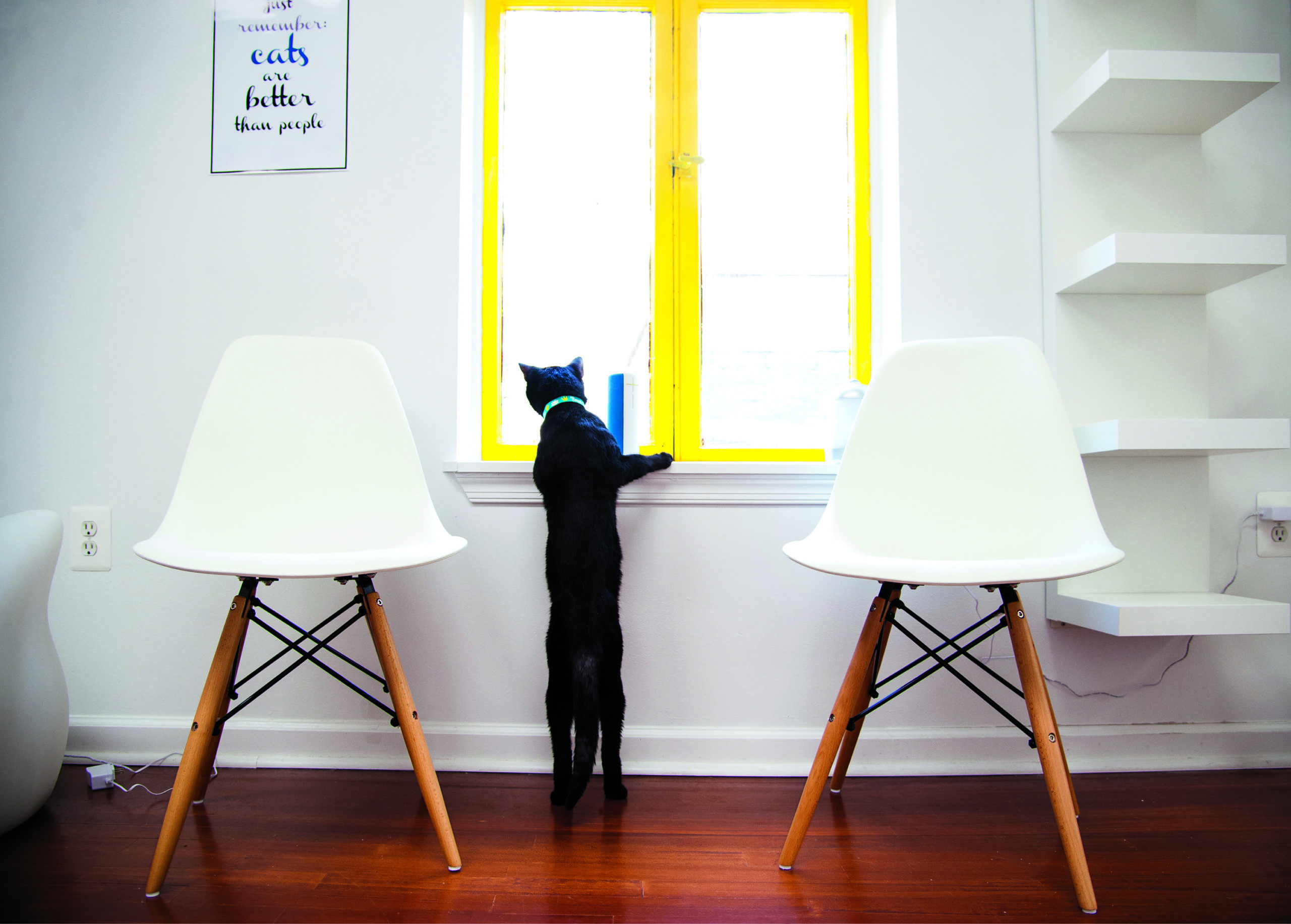 At DC's Cat Cafes, You Can Cuddle Kittens and Write Trump's Name on a Litter Box