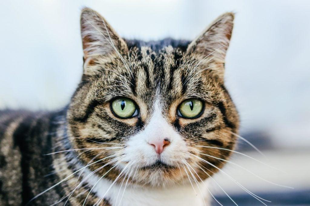cat cutest washingtonian contest enter mignon votre chat chats participez concours photographie assurez before kitten astrophe avoid late too