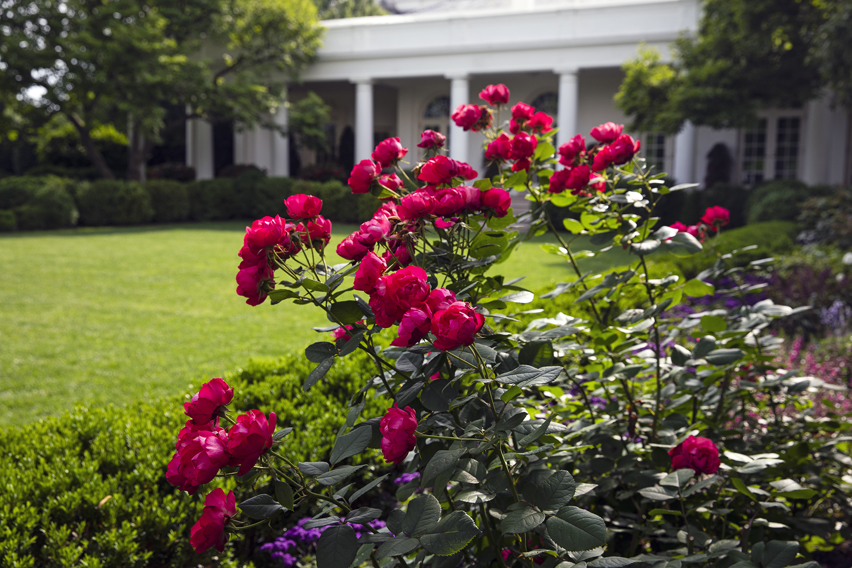 Melania Trump Tapped A Designer From The Hamptons To Oversee The Rose Garden Renovation Washingtonian Dc