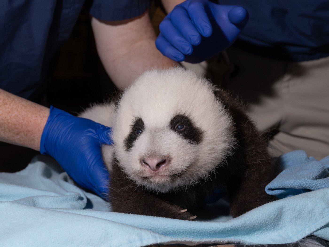 Photo courtesy of the National Zoo.