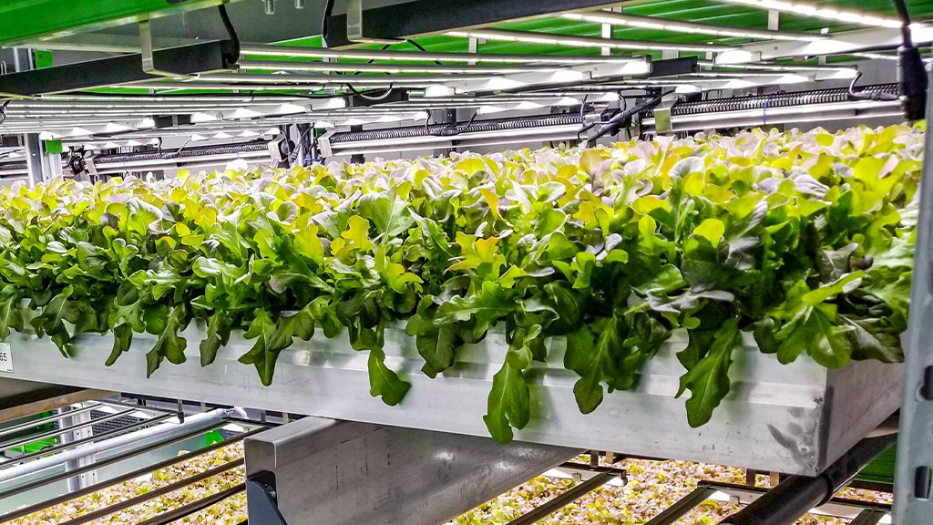 How An Indoor Farm Is Redefining Local