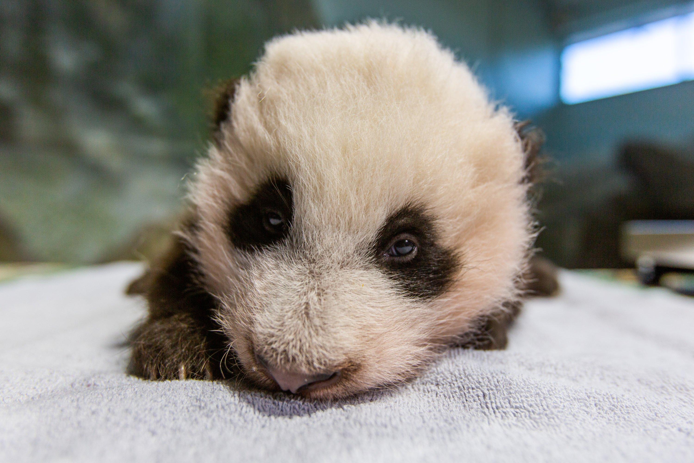 Photo courtesy of Smithsonian National Zoo.
