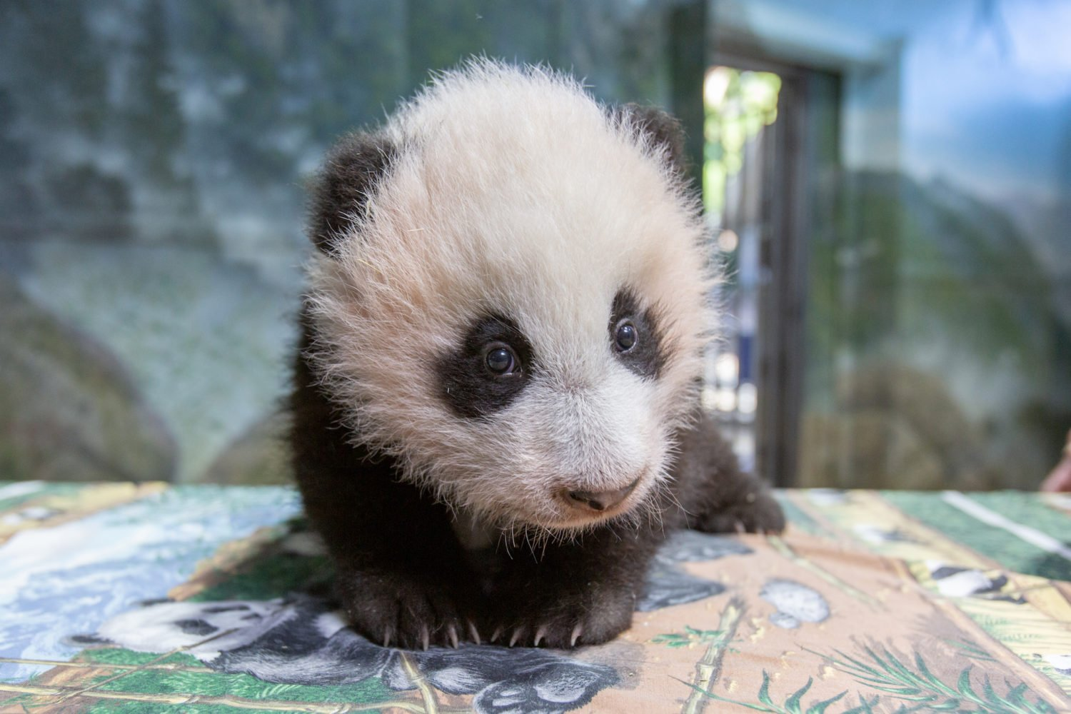 Photograph courtesy of Smithsonian's National Zoo.