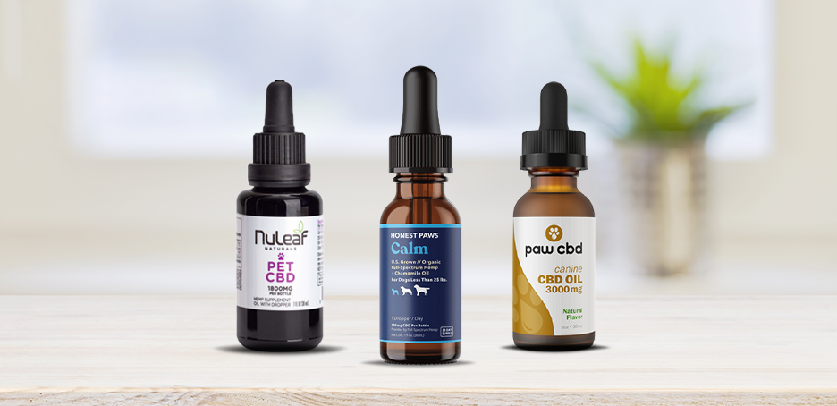 Best CBD Oil for Cats – Top Brands of 2021