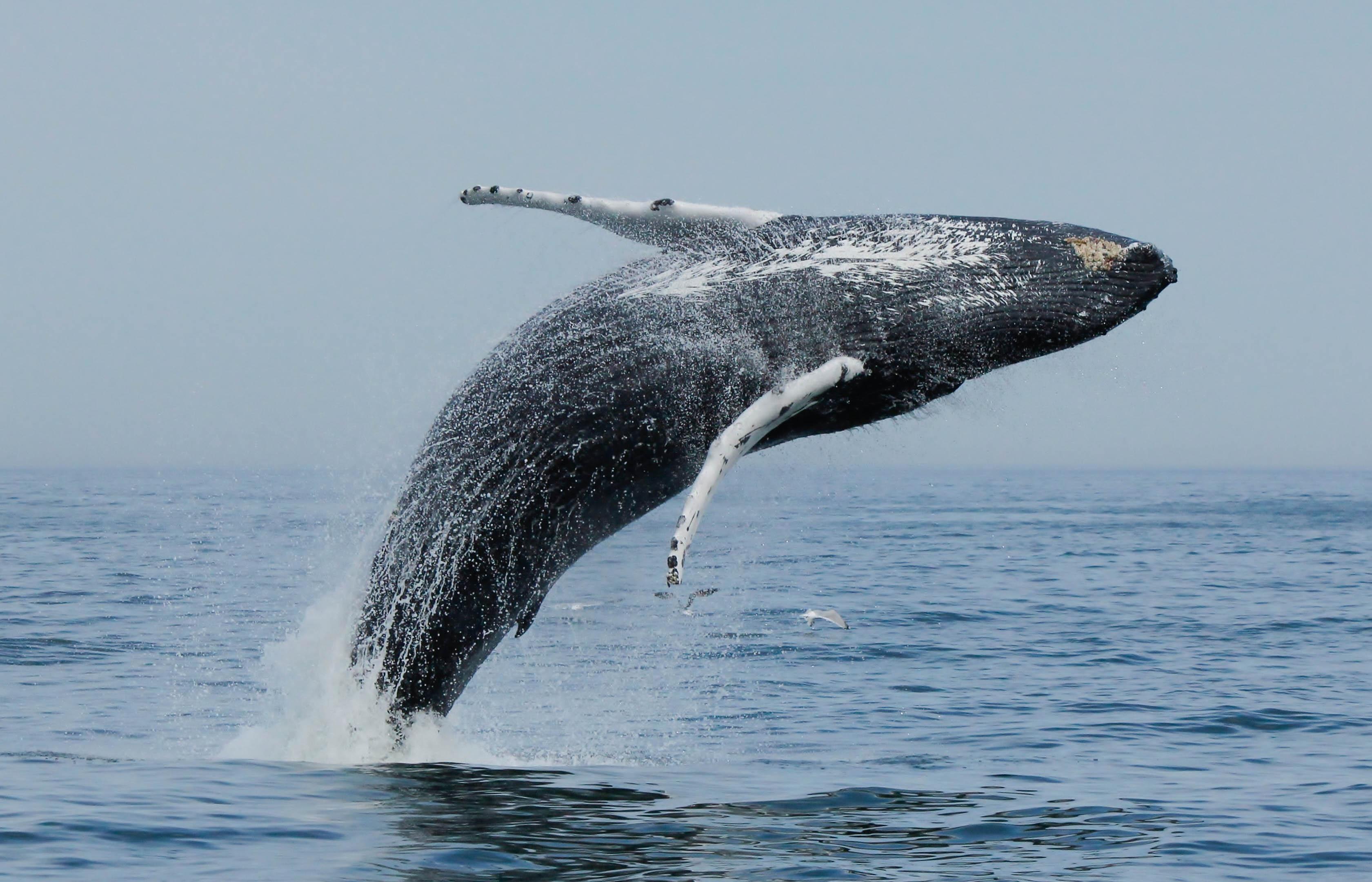 whales virginia beach