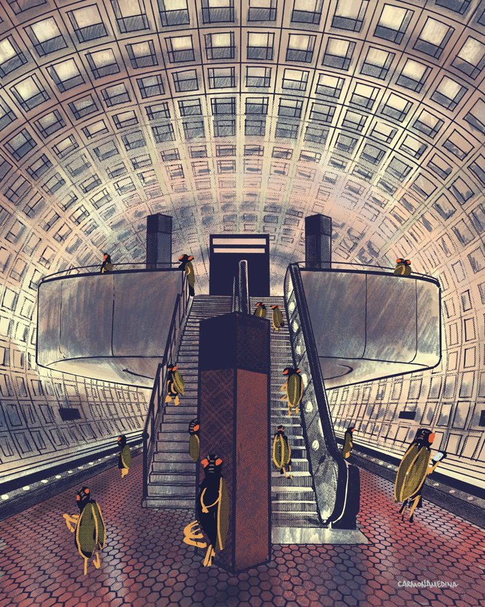 Cicadas Metro