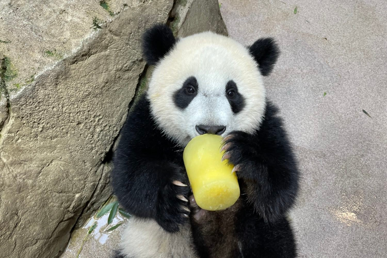 Happy Birthday, Baby! Photo courtesy of Smithsonian's National Zoo.