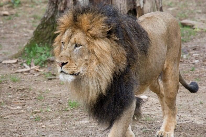 Photo courtesy of Smithsonian's National Zoo.